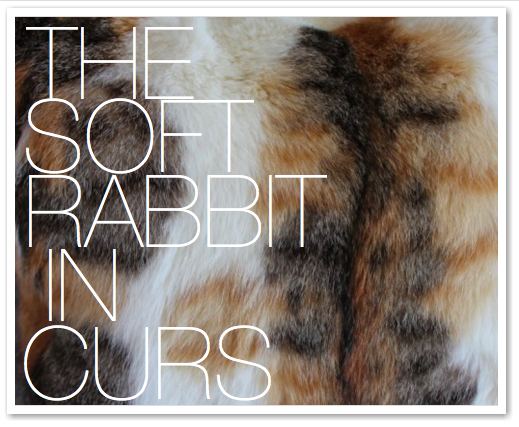 THE SOFT RABBIT IN CURS