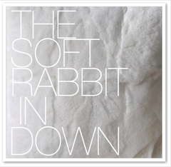 THE SOFT RABBIT IN DOWN
