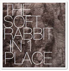 THE SOFT RABBIT IN 1 PLACE