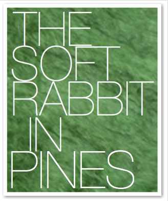 THE SOFT RABBIT IN PINES