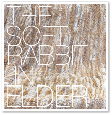 THE SOFT RABBIT IN ELDER