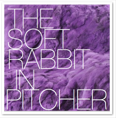 THE SOFT RABBIT IN PITCHER