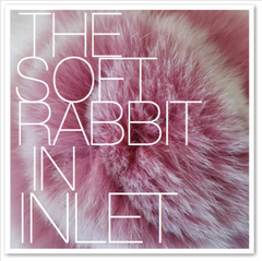THE SOFT RABBIT IN INLET