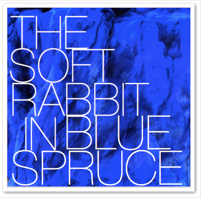 THE SOFT RABBIT IN SPRUCE