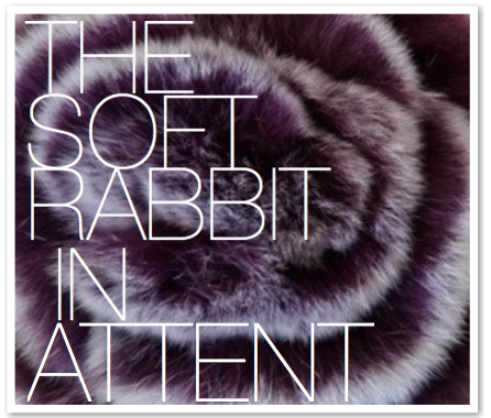 THE SOFT RABBIT IN ATTENT