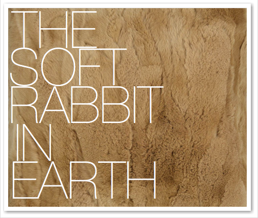 THE SOFT RABBIT IN EARTH