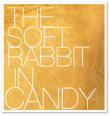THE SOFT RABBIT IN CANDY