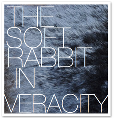 THE SOFT RABBIT IN VERACITY