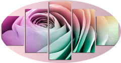 """FOUR COLOURED ROSE"""