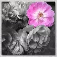 """A VIEW OF PINK PEONIES"""