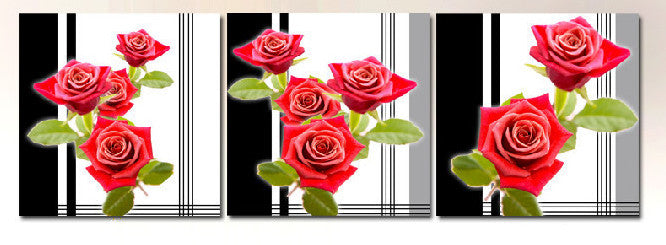 """PINK ROSES IN LINES"""