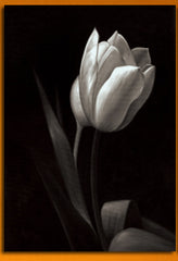 """BLACK & WHITE SHADOW FLOWERS"""