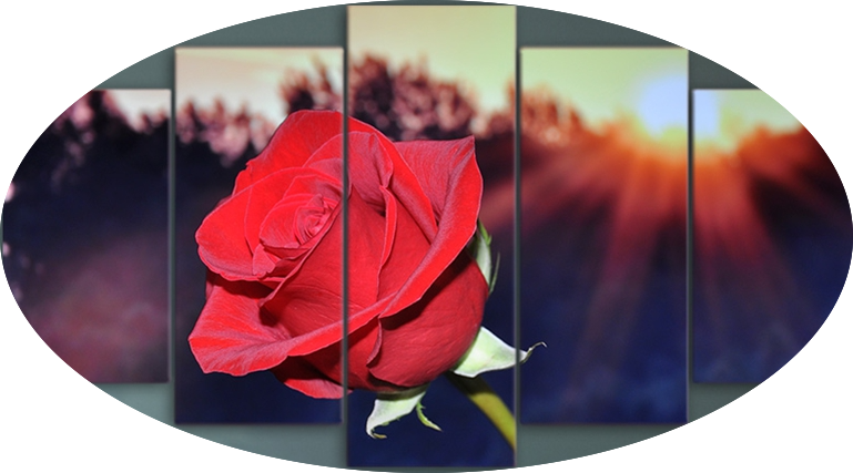"""SUNRISE ON A RED ROSE"""
