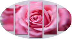 """SECOND OPEN PINK ROSE"""
