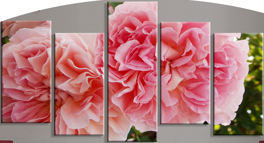 """SOFT PINK CARNATIONS"""