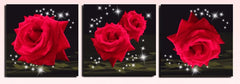 """SPARKLING RED ROSES"""
