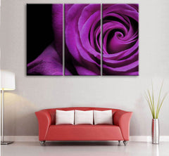"""THE SPIRAL ROSE"""