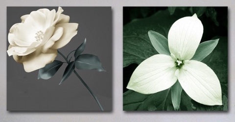 """TWO WHITE FLOWERS"""