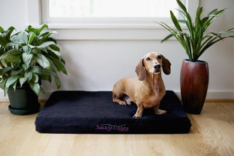 Pet Bed, Natural Rubber Latex