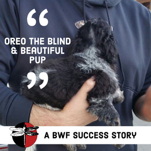 Oreo - Blind & Beautiful