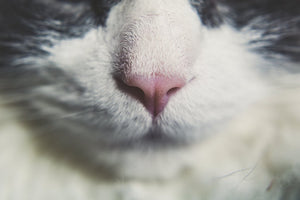 Cats and Essential Oils Controversy