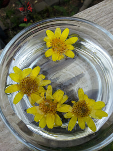 Arnica Flower Essence - Release emotional injuries.