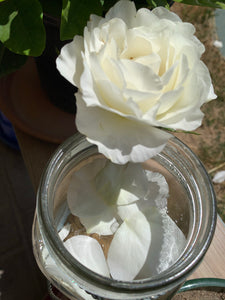 White Rose Flower Essence - Imagine what you could achieve...