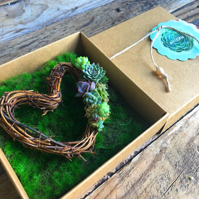 AROZONA Little Box of Succulent Love