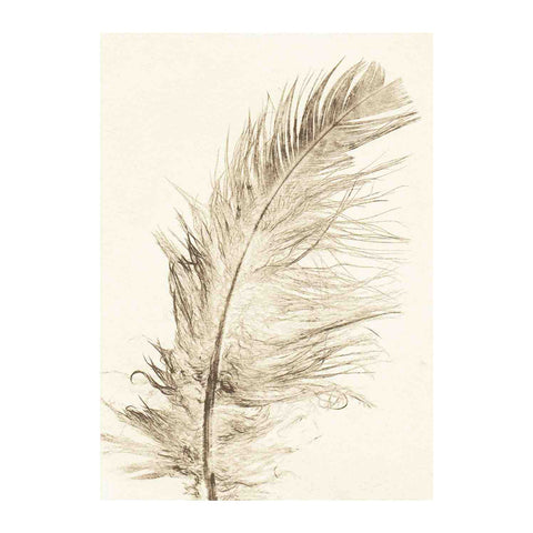 Feather Gold Limited Edition Print, Pernille Folcarelli