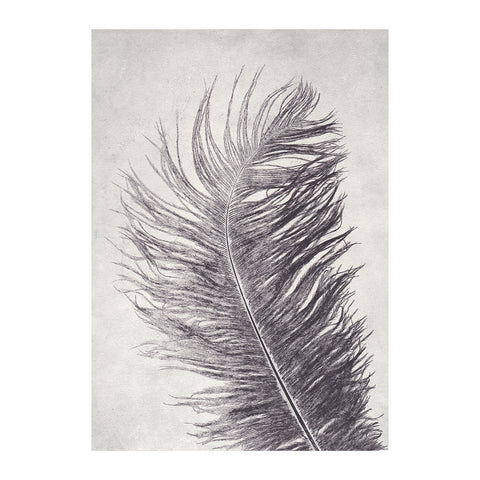 Grey Feather Limited Edition Print, Pernille Folcarelli