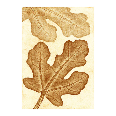 Fig Ochre Limited Edition Print, Pernille Folcarelli