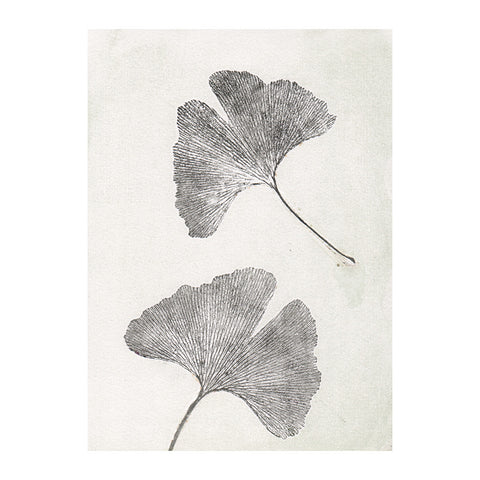 Ginko Oyster Limited Edition Print, Pernille Folcarelli