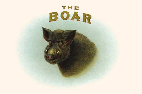 'The Boar' vintage print - Man Cave Ideas