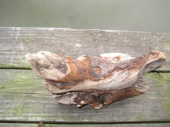 "BEAUTIFUL KNOBBY DRIFTWOOD 12"" x 8 1/2"" x 4 1/2"" Item #64"