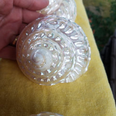 "BEAUTIFUL Polished Mother of Pearl Finish SHELL * 2 1/2"" - 3 1/2"" Diameter!"
