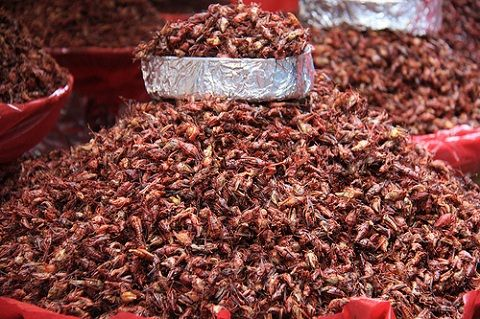I hear I need to try these...chapulines.... via Christine Zenino