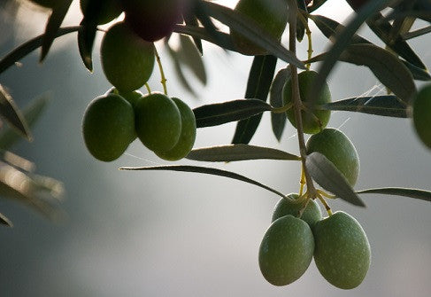 ARBEQUINA (Chile) evoo