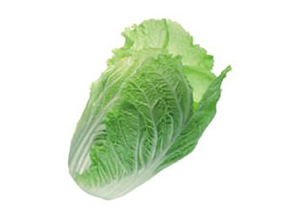 Organic Chinese cabbage (Chinakohl)