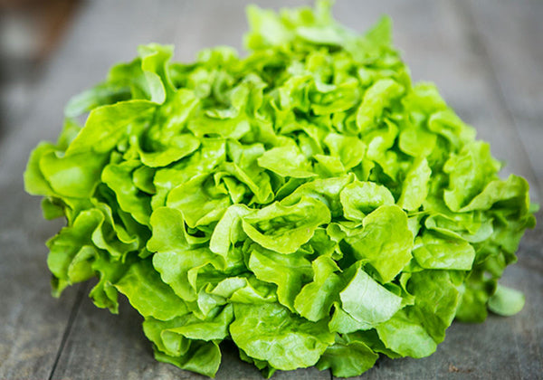 Organic Oak leaf lettuce green