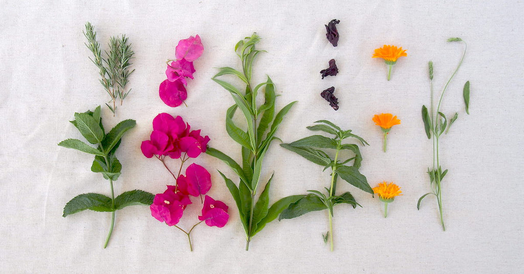 natural plant dyes from my garden