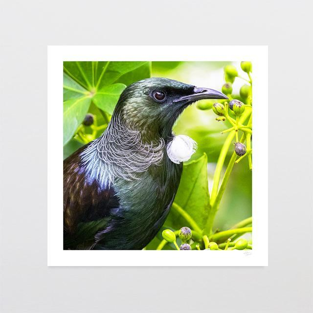 Majestic Tui Photo Print-Glenn Jones Art