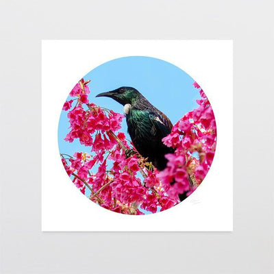 Blossom Tui Photo Print-Glenn Jones Art