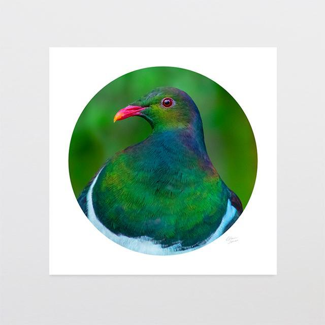 Kereru Camouflage Photo Print-Glenn Jones Art