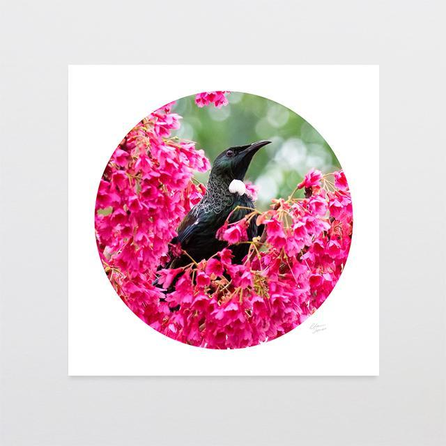 Pink Tui Photo Print-Glenn Jones Art