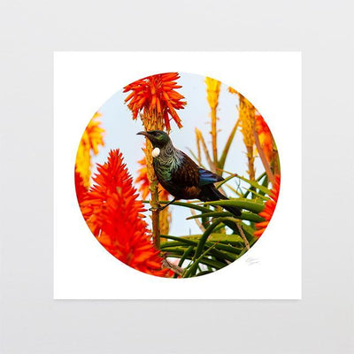 Sunset Tui Photo Print-Glenn Jones Art