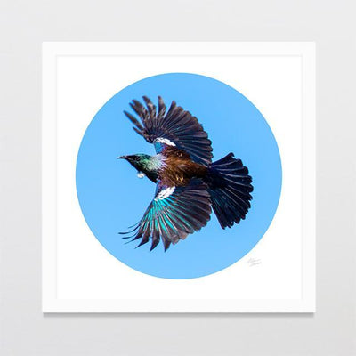 Tui Wingspan Photo Print-Glenn Jones Art