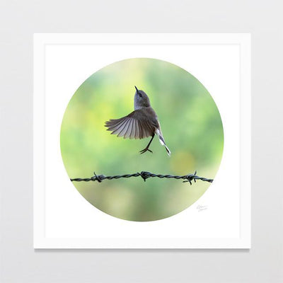 Warbler & Wire Photo Print-Glenn Jones Art