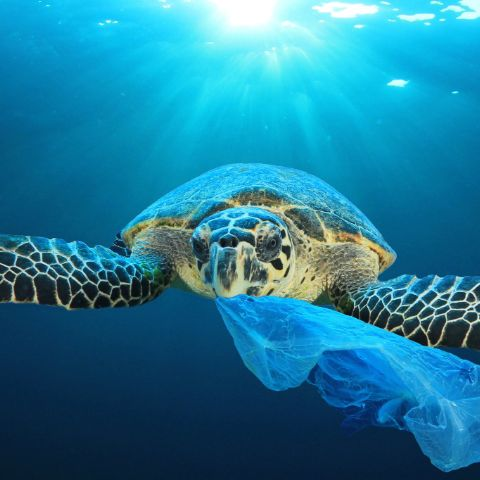 6 simple ways to reduce your plastic waste
