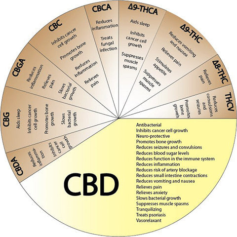 CBD Health Guide