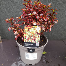 Load image into Gallery viewer, COPROSMA INFERNO 3L
